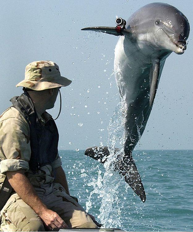 Common Bottlenose Dolphin Breaching Water