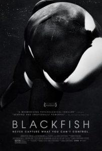 Blackfish Documentary Poster: Dolphin Movies