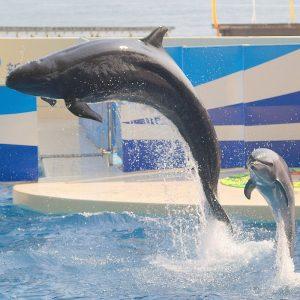 A False Killer Whale And A Bottlenose Dolphin